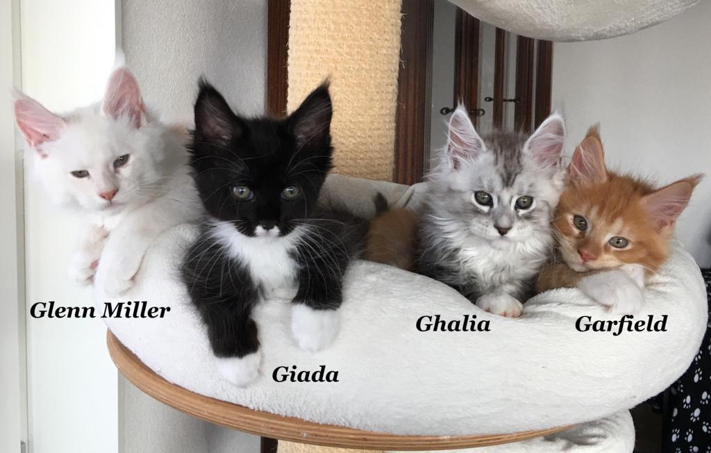 chatons de Pollyanna